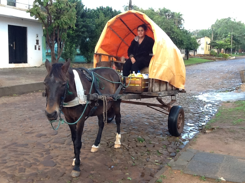 Milk delivery straight from the cow to our door in Villarrica!