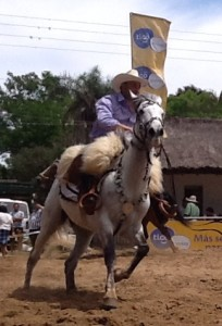 white face horse